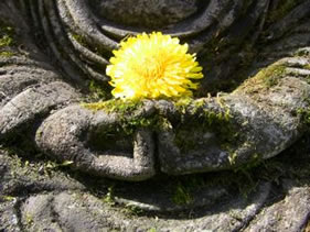 hands of stone buddha holding yellow flower